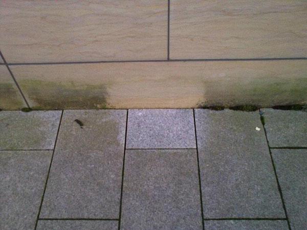 mosefjerner på flis